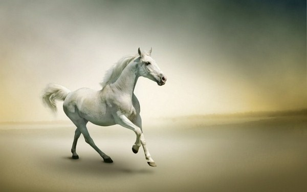 More Than 50 Super Beautiful Horse Photographs Decor10 Blog