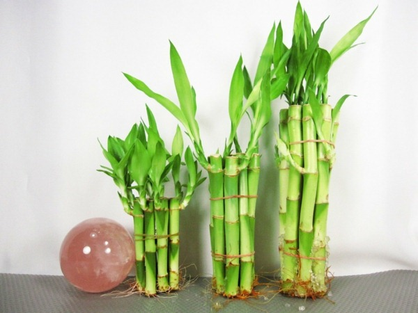 Outdoor fall decorating ideas - Room Bamboo Buy Happiness Bamboo Decorative