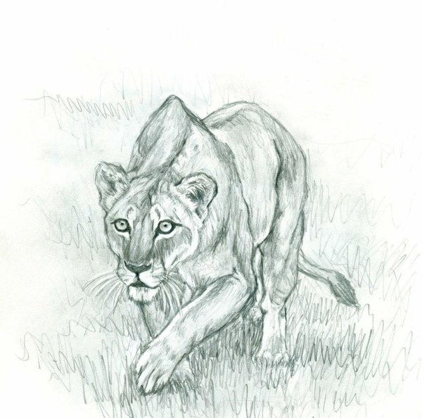learn to draw animals for nachmalen pictures