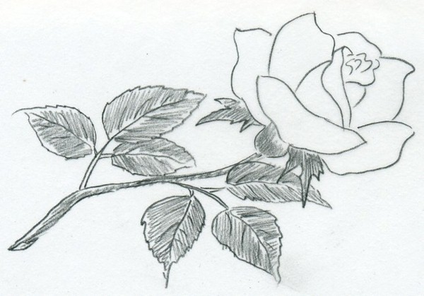 learn to draw for nachmalen Flowers