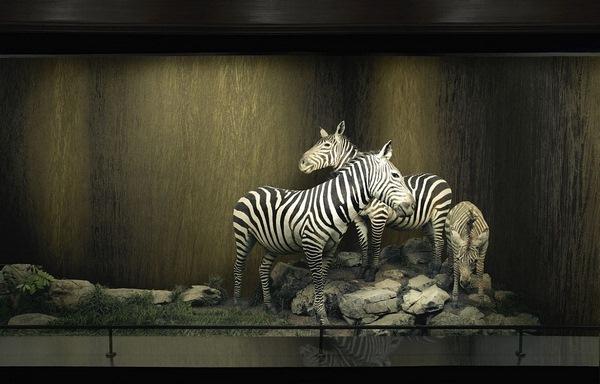 textured wallpaper arte international