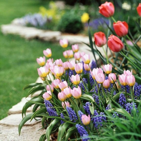 Creating garden ideas garden tulips make pink