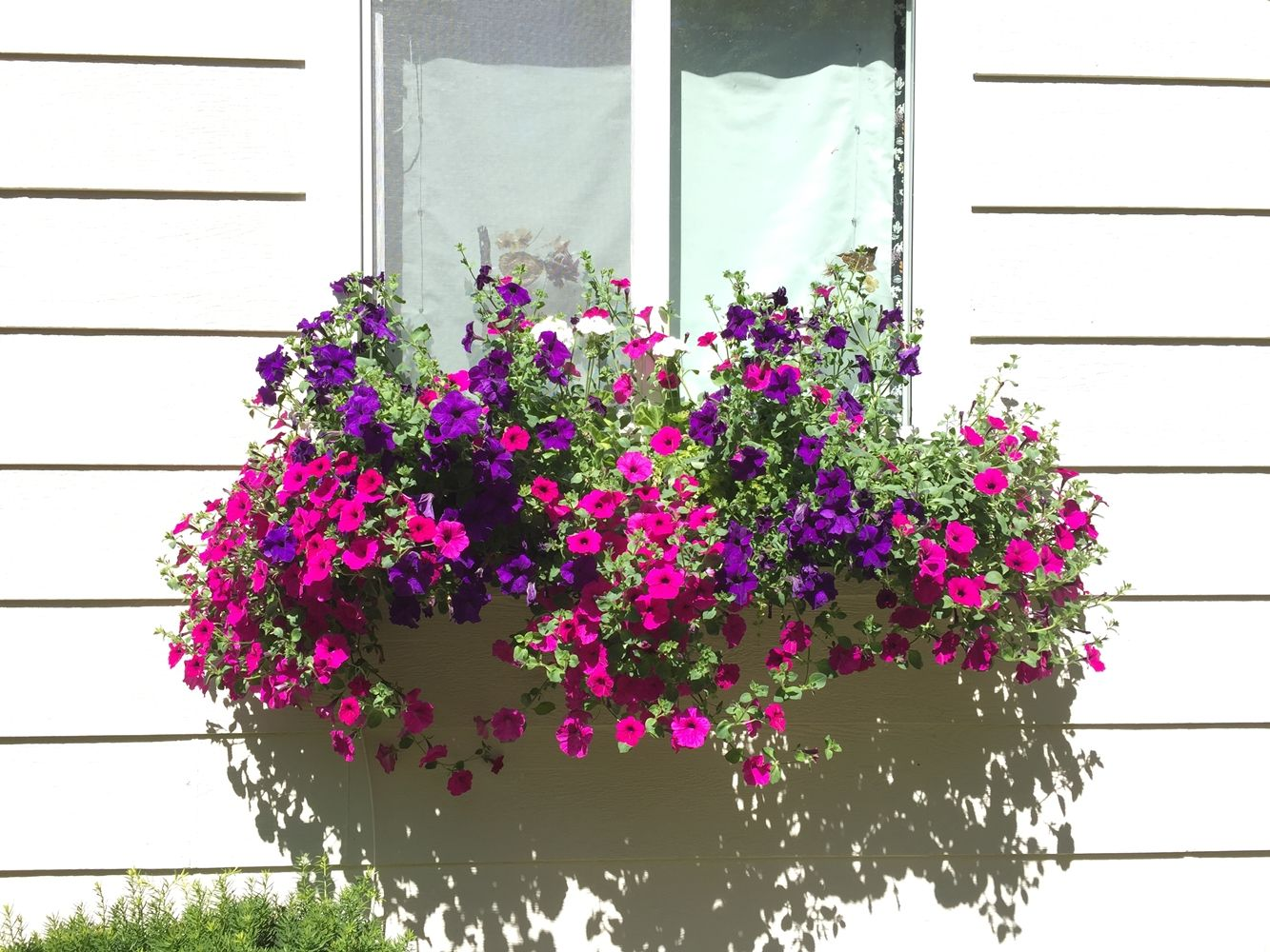 DIY Flower Bed Starts -beautiful window flowers