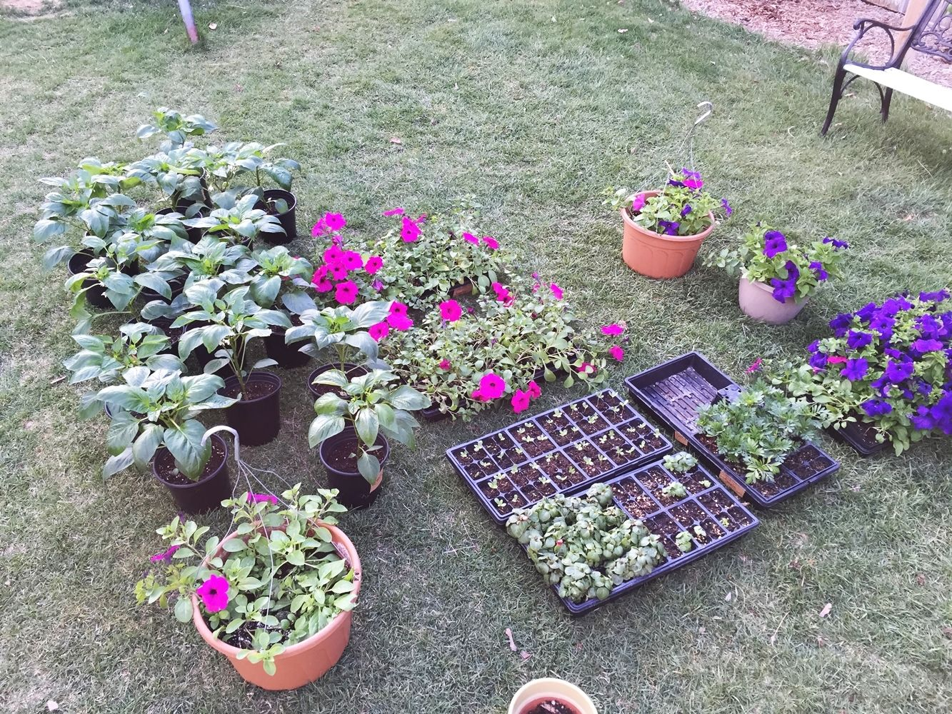 DIY Flower Bed Starts- watering and lighting
