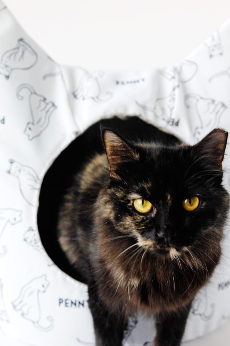 DIY Personalized Cat Dig With Cute Ears