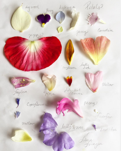 flower-petals-flora-forager