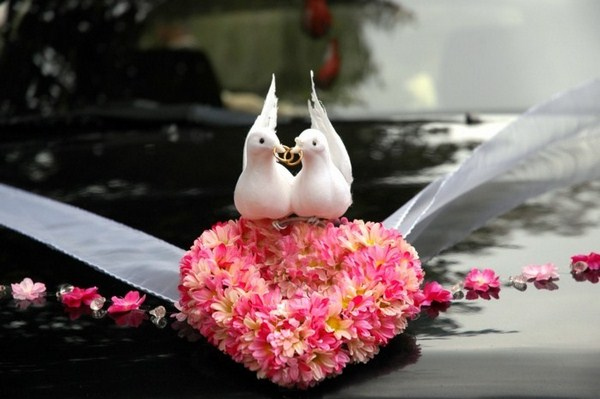 Pigeons for wedding on a fence