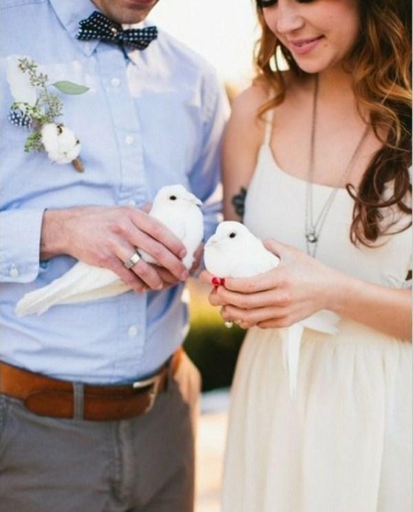 white dove did look so calm