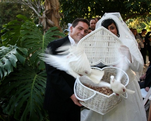 Pigeons for wedding out of a basket
