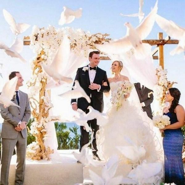 Pigeons for wedding flying everywhere