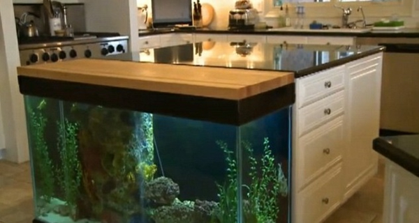 Kitchen Island Fish Tank kitchen island brings the tropics with aquarium to your home