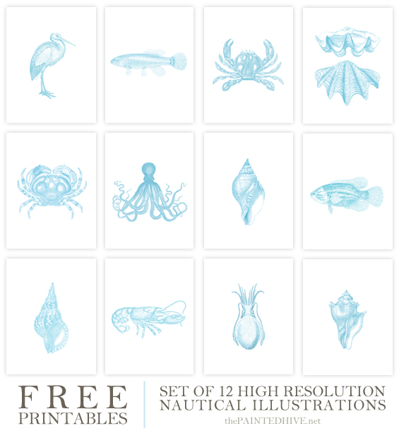 Free Printables - 12 Nautical Illustrations   The Painted Hive