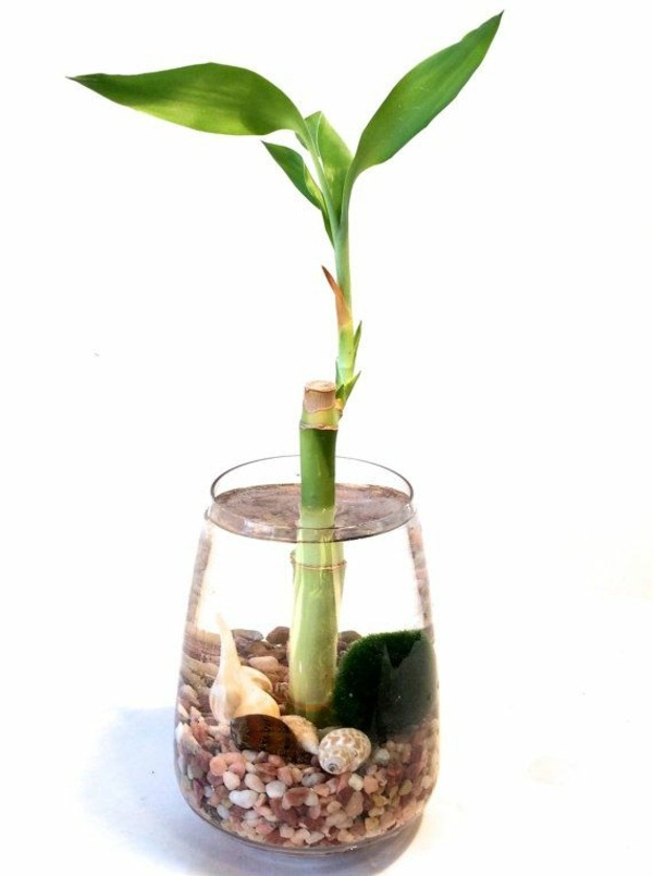 lucky bamboo indoor plants flower pot vase asia water