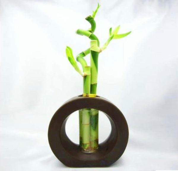 lucky bamboo indoor plants flower pot vase asia wood