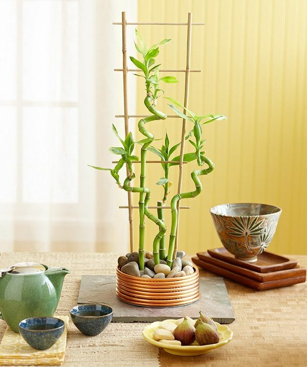 lucky bamboo indoor plants flower pot vase asian feng shui